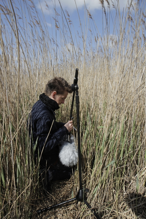 Field recording in reeds