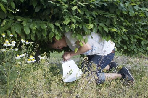 Wiring speaker in shrub